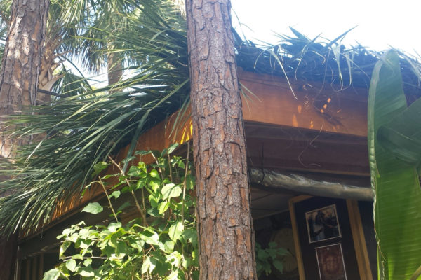 tiki thatched roofs palm roofs canopies 11